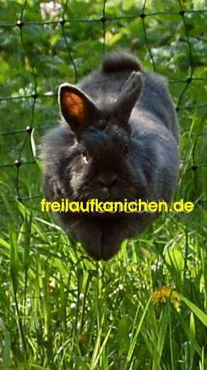 freilaufende kaninchen im garten mit elektrischem weidezaun von horizon. Black Bedroom Furniture Sets. Home Design Ideas