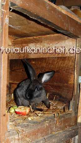 wann öffnen kaninchen die augen